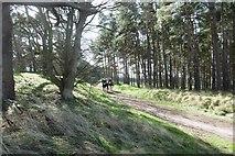 NT6378 : Track, Hedderwick Hill by Richard Webb