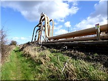 NZ5522 : Expansion loops beside the  Black Path by Oliver Dixon