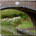 SK3704 : Arch and willowherb near Congerstone, Leicestershire by Roger  Kidd