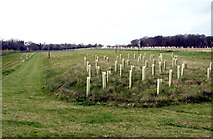 TG2219 : The Bluebell Wood burial park by Evelyn Simak