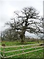NY6127 : The Dalston Oak, from the west, Acorn Bank estate by Christine Johnstone