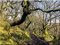 SK2579 : Gnarled trees and mossy rocks by Graham Hogg