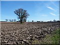 SK2308 : Trees on a former field boundary, west of Gorse Farm by Christine Johnstone