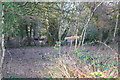 SU6981 : Deer in woodland on north side of Stoke Row Road by Roger Templeman