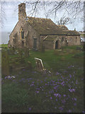 SD4161 : Spring crocuses at St Peter's Church, Heysham by Karl and Ali