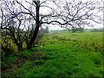 H5371 : Bare tree, Bracky by Kenneth  Allen