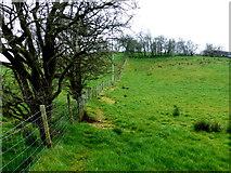 H5371 : A low hill, Bracky by Kenneth  Allen
