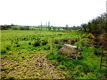 H5371 : Between fields, Bracky by Kenneth  Allen