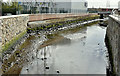 J3674 : The Connswater, Belfast - March 2017(4) by Albert Bridge