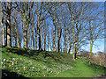 TA0389 : Spring flowers, Peasholm Park  by Stephen Craven