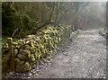 ST4854 : Mendip mosses by Neil Owen