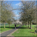 TL4459 : On Jesus Green in spring by John Sutton