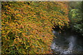 SX0963 : River Fowey and autumn leaves, at Respryn Bridge by Christopher Hilton