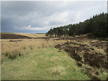 SE8097 : Tranmire Bogs and Cropton Forest by Jonathan Thacker