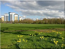 SK5803 : Nelson Mandela Park in Leicester by Mat Fascione