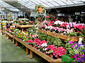 SO8296 : Lealans Garden centre plants near Shipley, Shropshire by Roger  Kidd