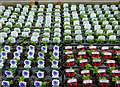 SO8296 : Ongrowing plants at Lealans nursery in Shipley, Shropshire by Roger  Kidd