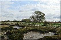 TQ9293 : Paglesham Creek near Loftman's  Sluice by John Myers