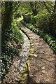 SX8654 : Path, Dittisham by Derek Harper