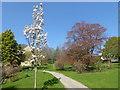TQ5237 : In the gardens of Burrswood Hospital by Marathon