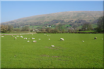 SD7186 : Sheep and new lambs near Double Croft by Bill Boaden