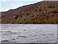 NH5228 : Loch Ness Shore South of Urquhart Castle by David Dixon