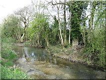 SU0194 : The River Thames near Neigh Bridge Lake by David Purchase