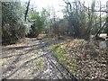 TQ3933 : A woodland track on Ashdown Forest by Marathon