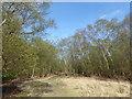 TQ3933 : A path on the edge of open heathland on Ashdown Forest by Marathon