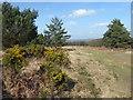 TQ4033 : Heathland near Hindleap Warren by Marathon