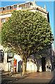 SE2933 : Tree on the corner of Cookridge Street by Stephen Craven