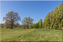TQ3095 : Oak Trees, Oakwood Park, London, N14 by Christine Matthews