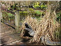 NY5525 : Crocodile at Larch Cottage Nurseries by David Purchase