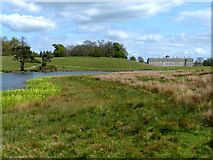 SU9622 : Petworth Park by Chris Gunns