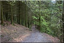 NY2427 : Longside Wood by Robert Eva