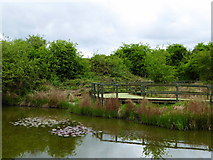 TQ8068 : Sharp's Green Pond, Riverside Country Park by pam fray