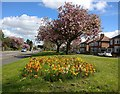 SK5701 : Flowers and blossom along Aylestone Road by Mat Fascione