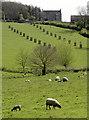 ST6963 : Avenue, not the Wansdyke by Neil Owen