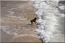 SC2484 : Fenella Beach by Stephen McKay