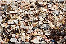 SC2484 : Sea shells - Fenella Beach by Stephen McKay