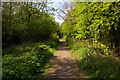 TQ2391 : Path along abandoned railway line, Mill Hill by Christopher Hilton
