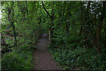 TQ0866 : Thames path boardwalk by Robert Eva