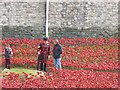 TQ3380 : A field of Poppies by Malcolm Neal