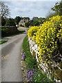 SP1020 : Spring flowers, Notgrove by Christine Johnstone