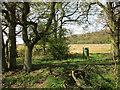 SP6440 : Pheasant feeder by Jonathan Thacker