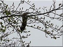 SD6911 : Squirrel acrobatics by Philip Platt