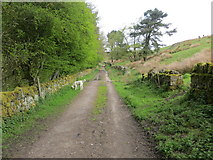 SE0631 : Walled track above and to the east of Ogden Reservoir by Peter Wood