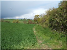 TM1928 : Crop field and hedgerow, Great Oakley by JThomas