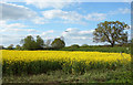 SP3305 : Field near Rushy Butts by Des Blenkinsopp