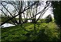 SK8282 : River Trent at Littleborough by Mat Fascione